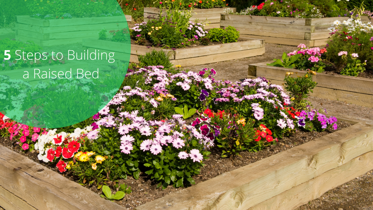5 Steps to Building a Raised Bed