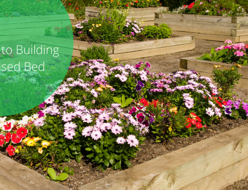 How To Build A Raised Bed In 5 Easy Steps